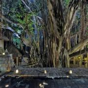 Alter Banyan Baum bei Nacht im 4-Sterne Canonnier Beachcomber Golf Resort & Spa auf Mauritius.