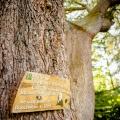 Schild an Baum im Garten des 4-Sterne Bunchrew House Hotel in Inverness in Schottland.
