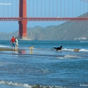 Hunde spielen am Strand unter der Golden Gate Bridge in San Francisco. © Scott Chernisk Photography